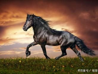 """刀片/石墨烯/""""无钴""""电池谁才是动力电池的未来黑马"""